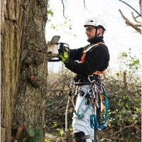 AskTwena online directory Tree Service Stamford in Stamford